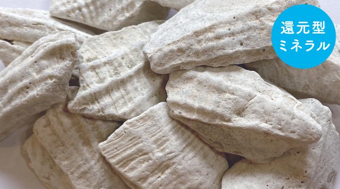 貝化石カルシウム